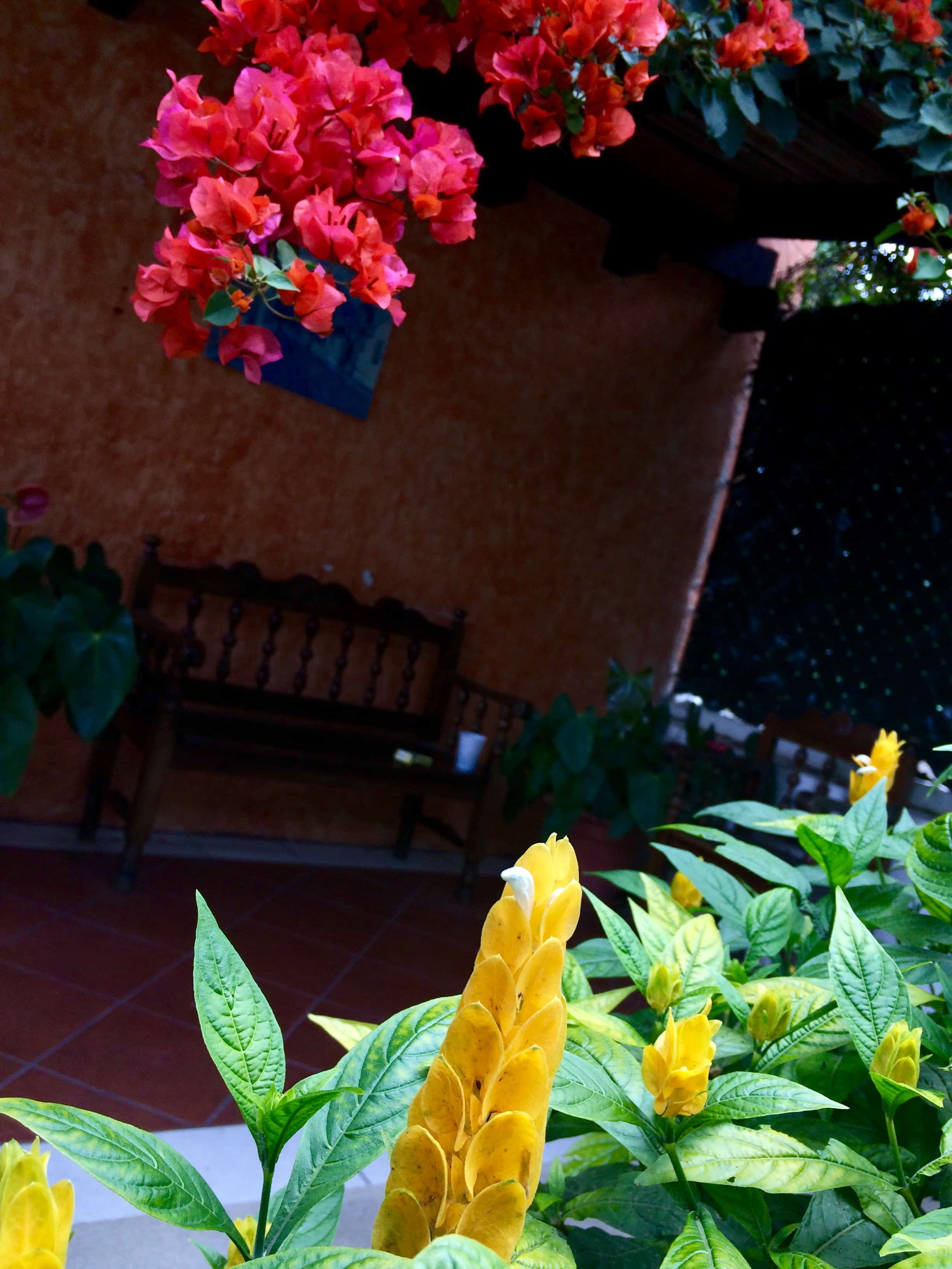 Antigua-guatelamal-jardin