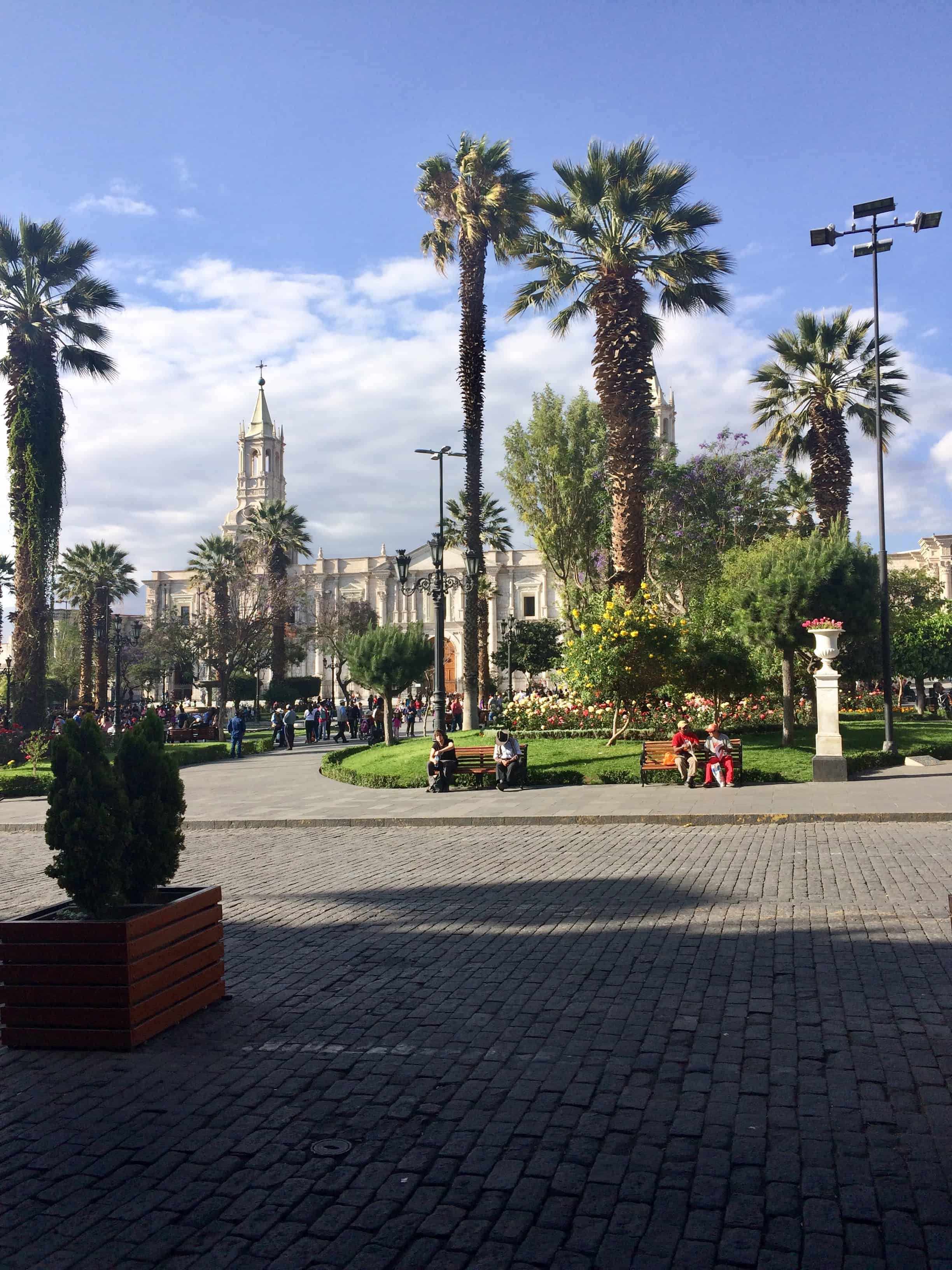 Place-arequipa-perou-palmier-place-cathedrale