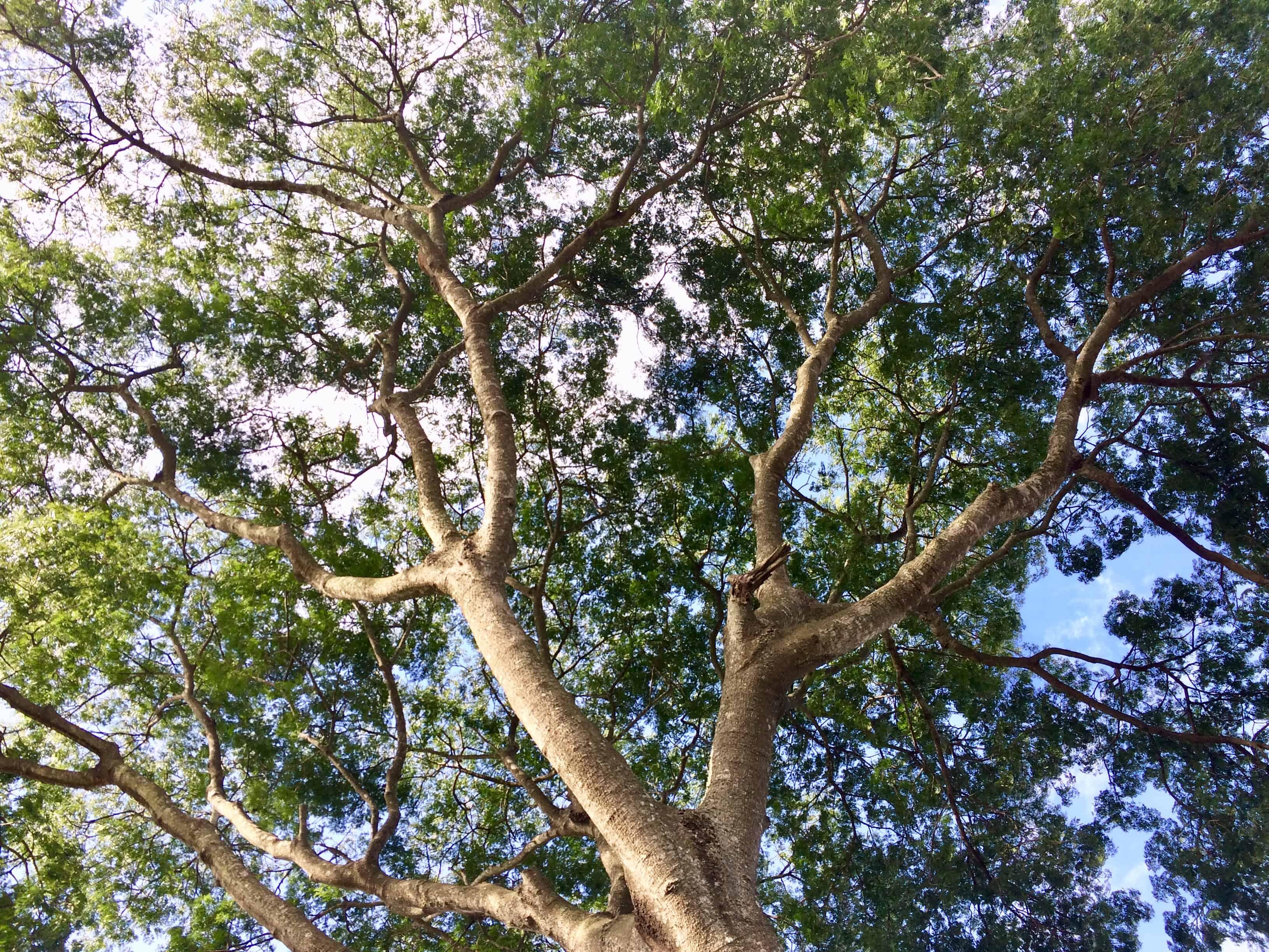 Ciel - arbre - nature - beauté