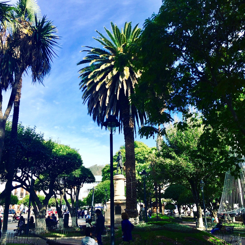 Place - arbre - sucre - Bolivie - jolie ville