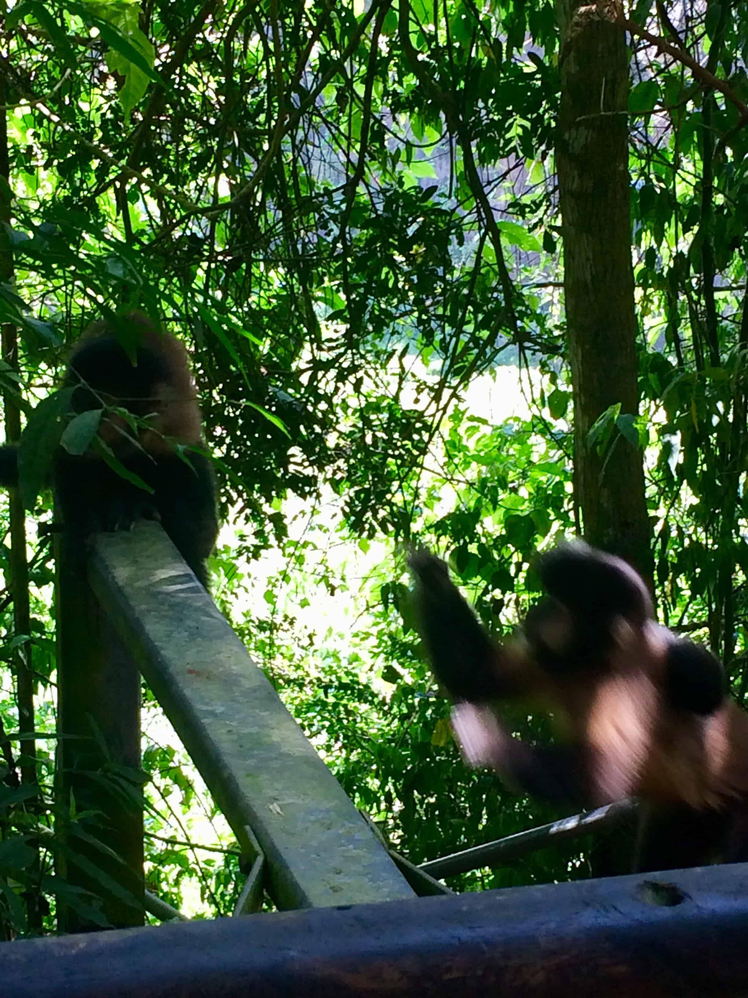 Chutes - Iguazú - Brésil - Argentine - Paraguay - naturel - impressionnant - magnifique -