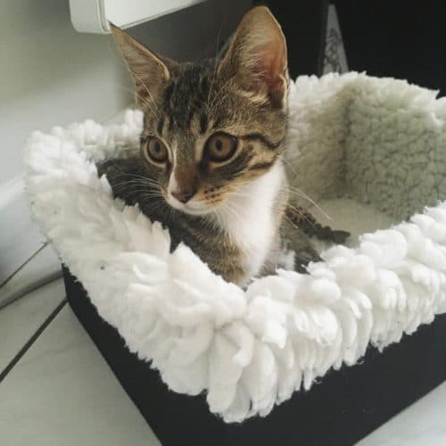 Tuto Panière pour chat